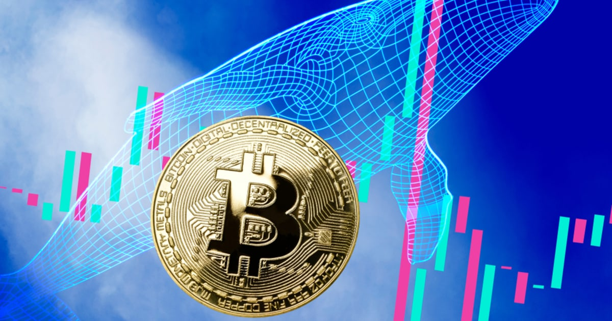 Bitcoin Whale Addresses at an All Time High as Major Indicators Suggest Bullish Outlook for BTC