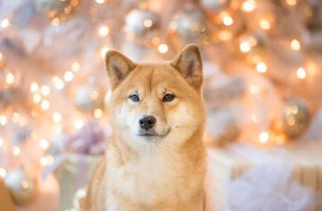 Dogecoin Is Bullish and Up 28% Despite Crypto Market's Weekend Flash Crash